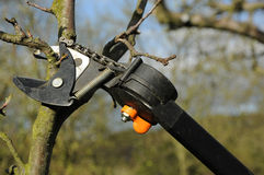 Tree cutting. Cutting tree with a pruning shears Stock Photos