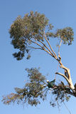 Tree Cutting Stock Image