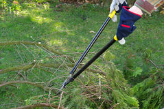 Tree cutting Stock Image