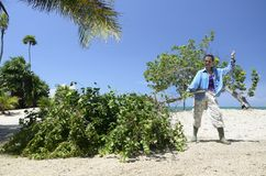 Tree cutting in the caribbean Royalty Free Stock Photo