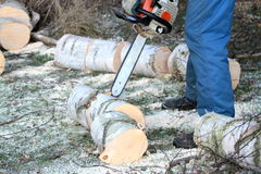 Tree cutting with chainsaw Stock Images