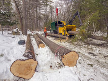 Tree cutting. And chipping on residential road Royalty Free Stock Photo