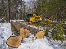 Tree cutting. And chipping on residential road Royalty Free Stock Photography