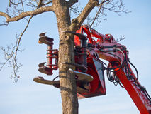Tree cutting crane about to cut a tree Stock Photography