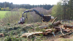 Tree cutting machine. Ry - tiger cut Stock Photos