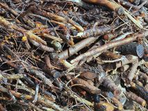 Tree Cutting Woodpile Stock Photo