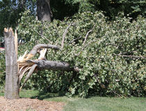 Tree damaged by high winds. In a sudden severe storm in Blair, Nebraska Stock Photography