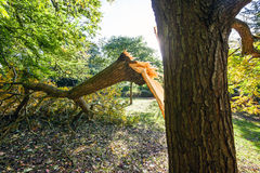 Tree Damaged During UK Storm Stock Photography