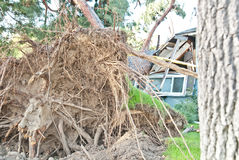 Tree Damages House Royalty Free Stock Photography