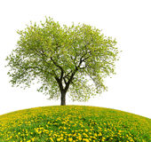 Tree on dandelion field Stock Photography