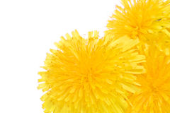 Tree dandelion macro flowers Royalty Free Stock Photos