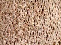 Tree texture. Tree branch texture palm tree royalty free stock photos