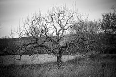 Tree with dark branches Royalty Free Stock Images
