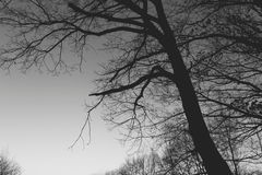Tree in the dark Royalty Free Stock Images