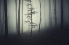 Tree in dark scary forest on Halloween night Stock Photo