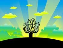 Tree at dawn Stock Photography