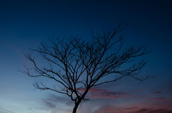 Tree at dawn. Royalty Free Stock Photo
