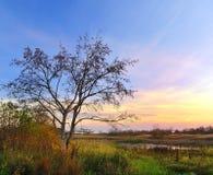 Tree at dawn. A tree fall close to the Lake at dawn Royalty Free Stock Photos