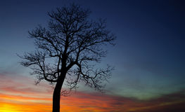 Tree at days end stock photos