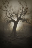 Tree of the dead Stock Image