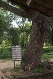 The tree of dead Cambodia. This tree is where the Khmer rouge killed many children by slamming them on the trunk after the end of the Vietnam war, the ribbons Royalty Free Stock Photography