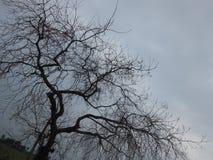 Tree. Dead tree life Stock Photography