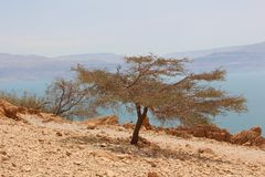 A tree with Dead Sea in the background. A tree with Dead Sea and jordanian mountains in the background Royalty Free Stock Image