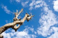 Tree dead sky background Stock Photo