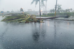 Tree and debri in road during typhoon Royalty Free Stock Photo