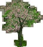 Tree, Deciduous Tree, Flowers Stock Photos