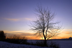 Tree on a decline. Tree on a bright background of the coming sun Stock Image