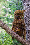 Tree decoration owl Royalty Free Stock Photos