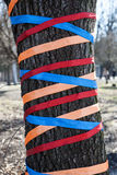 Tree decorated with colored ribbons Royalty Free Stock Image