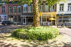 Tree decorated with planter and vines city of breda. Netherlands Netherlands. Tree decorated with flowerpot and vines in the background business in the center of Stock Image