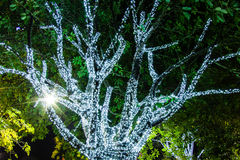 Tree decorated with white small lights. A tree decorated with white small lights in night garden at Chiang Rai Asian flower festival Thailand 2015 Stock Photography