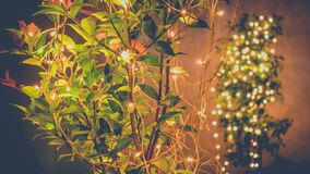 Free Tree Decoration With Led Bulbs Night Royalty Free Stock Photography - 184422667
