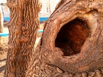 Tree with a deep hollow. stock photos