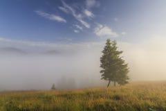 Tree in a dense fog. Carpathians. Royalty Free Stock Photo