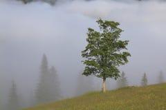 Tree in a dense fog. Carpathians. Royalty Free Stock Photos