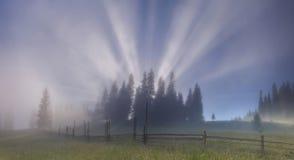 Tree in a dense fog. Carpathians. Stock Photo