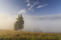Tree in a dense fog. Stock Images