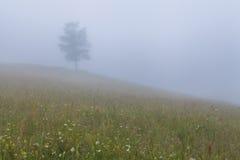 Tree in a dense fog. Royalty Free Stock Photos
