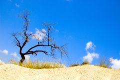 Tree in desert Royalty Free Stock Photography