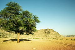 Tree in the desert Stock Photography