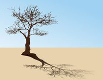 Tree on desert Royalty Free Stock Photo