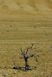 Tree in the desert Stock Photo