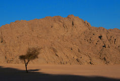 Tree in the desert. Dead tree stands in the desert against the backdrop of the mountains Royalty Free Stock Photography