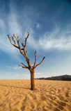 The tree in desert Royalty Free Stock Photography