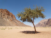 Tree at Desert Stock Photo