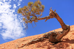 A tree in desert Royalty Free Stock Photos